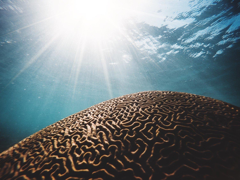 Neuroplasticità, come funziona e come allenare il cervello